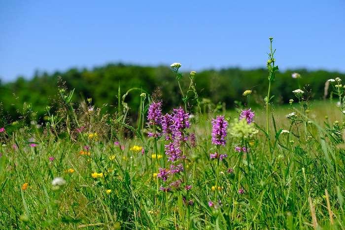 Blumenwiese (2)